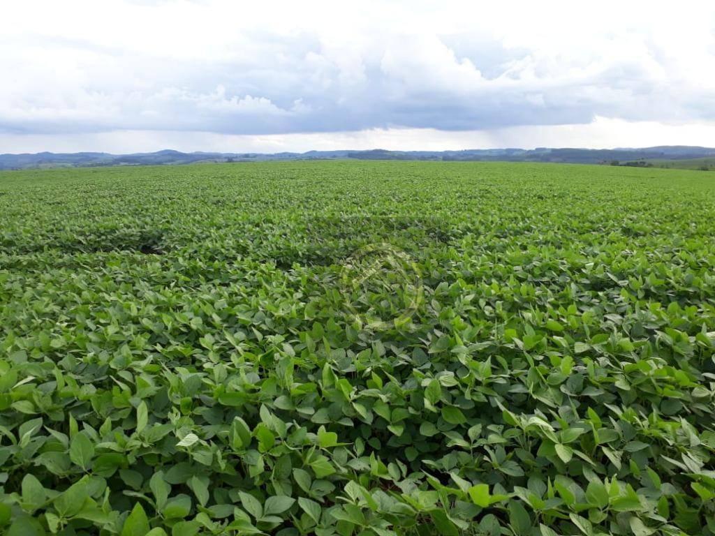 Fazenda 0 quarto(s) para  em Zona Rural/PALMITAL