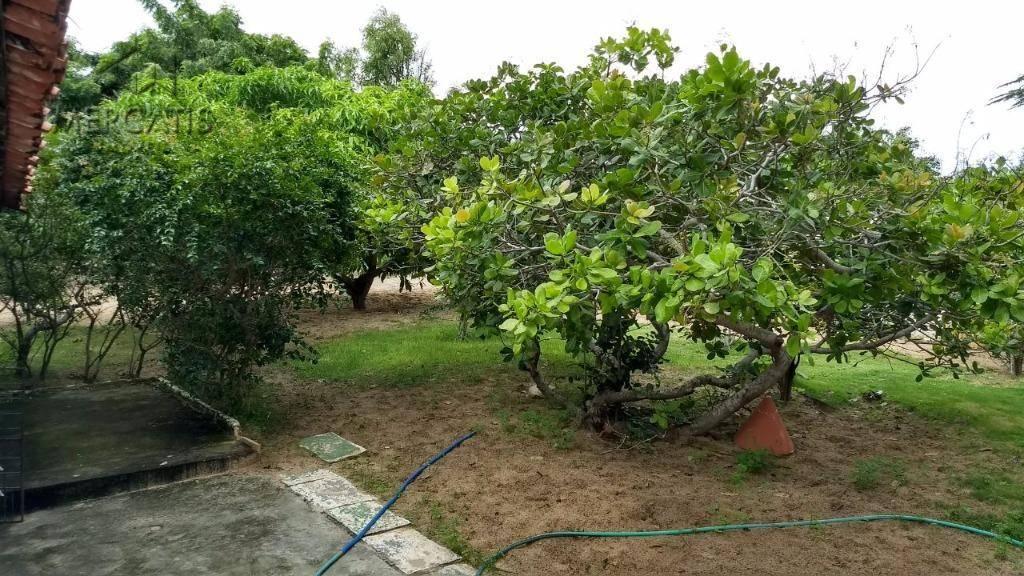 terreno  |  árvores frutíferas