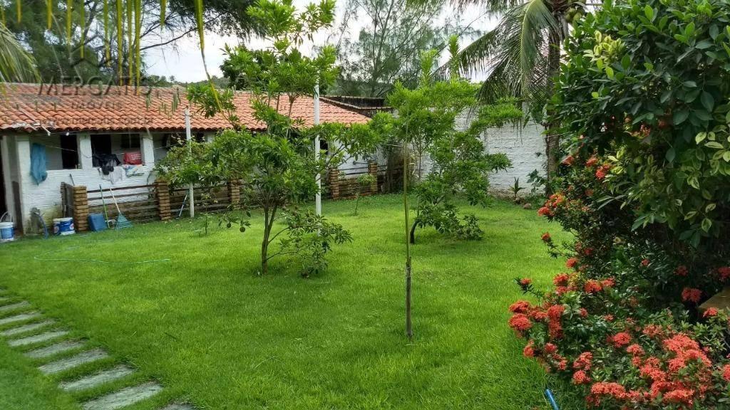 jardim     quintal