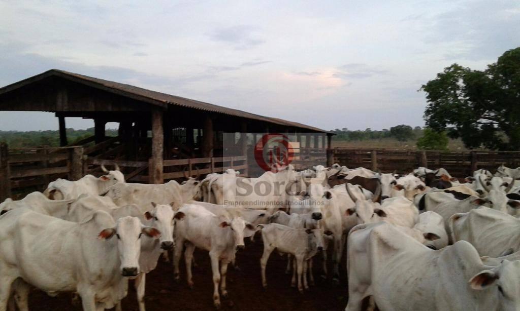 Fazenda rural à venda, Centro, Ribeirão Cascalheira.