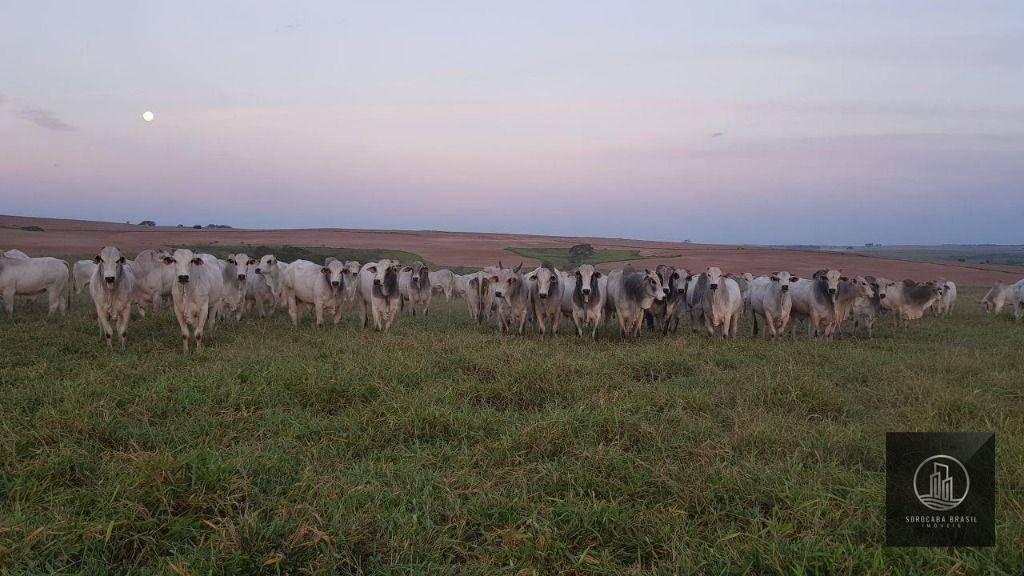 Fazenda à venda por R$ 165.000.000 - Centro - Pompéia/SP